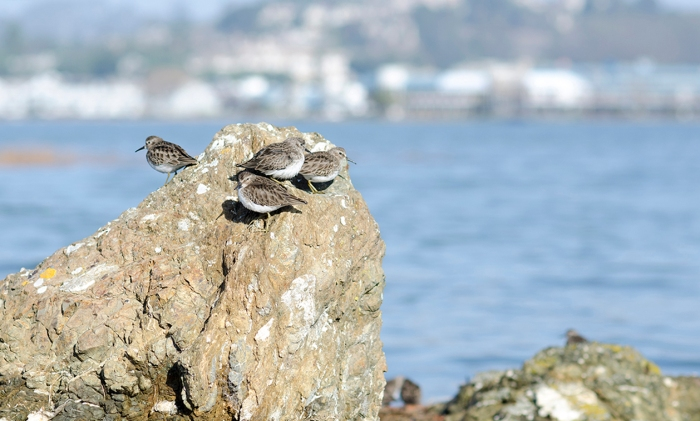 Stinson Birds