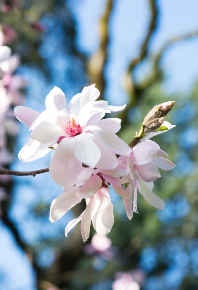 spring :: charlotte dupont