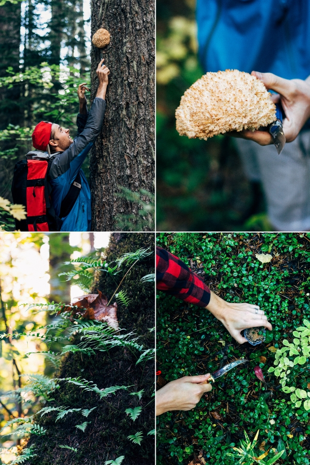 fall mushroom harvest » it's me, charlotte!